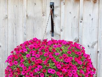 Floral decorations - Decor. Floral ball.