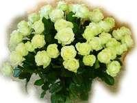 Ein Strauß weißer Rosen, weiße Rosen