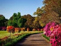 Květiny v parku.