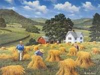 Village. Summer. Harvest.