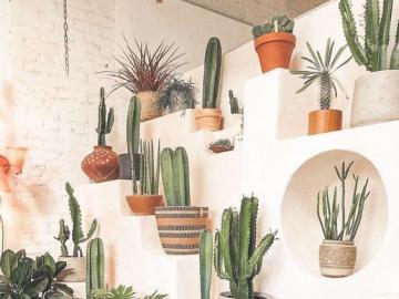 Pared con cactus - Una pared con cactus, una idea para la decoración.