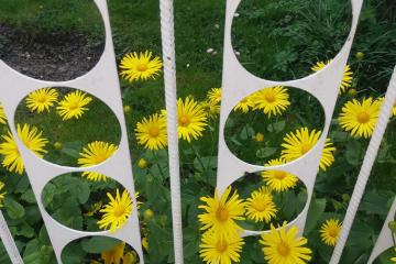yellow flowers behind the fence - yellow flowers behind the fence