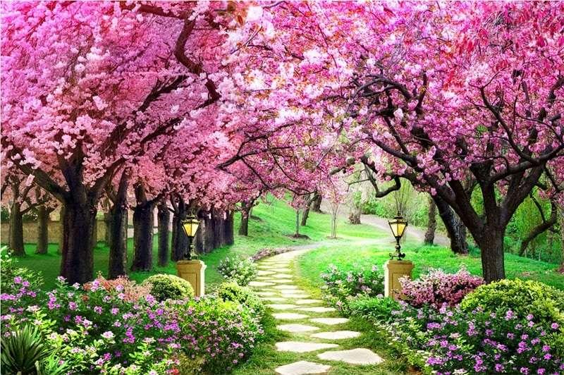 Alley a virágzó fák között (11×10)