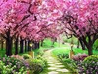 Αλέα ανάμεσα σε ανθισμένα δέντρα