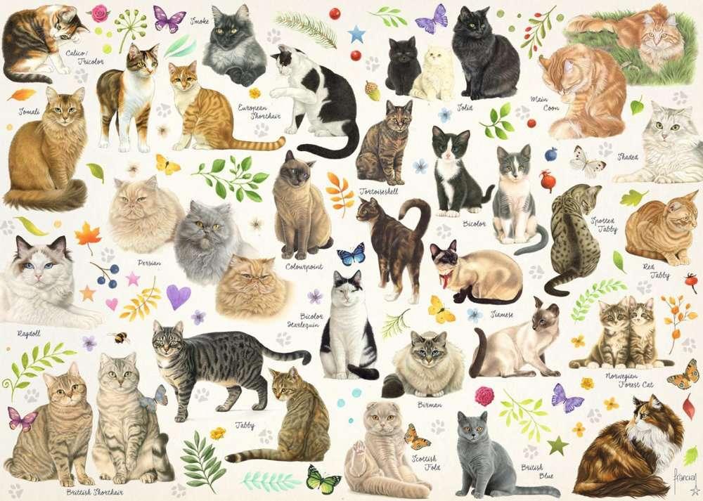 Kattenfamilie - Dieren. Kattenfamilie (11×11)