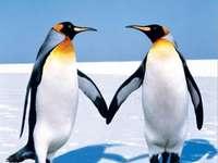 Egy pár pingvin