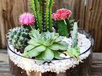 Horta - Jardim em casa com cactus