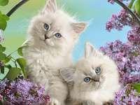 Spring Cats - Kitty Kats