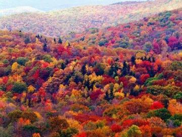 Drzewa kolorową jesienią, kolorowe liście jesienne - Drzewa kolorową jesienią. Różne kolory drzew, kolorowe liście jesienne. Jesienne liście w kolo