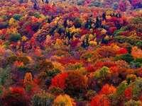 Barevné podzimní stromy, barevné podzimní listí