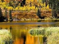 Färgglada fallträd, höstlöv - Färgglada träd i höst. Träd dekorerade med höstlöv. Höstlöv är ett mirakel av naturen. Vack