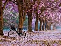 Lente in het park - Lente in een bloeiend park