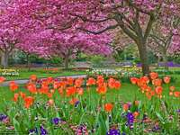 Tavasszal a parkban.