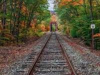 trackway - Paesaggio. Traccia nella foresta.