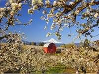 Jarní krajina - Jarní krajina s horou v pozadí.