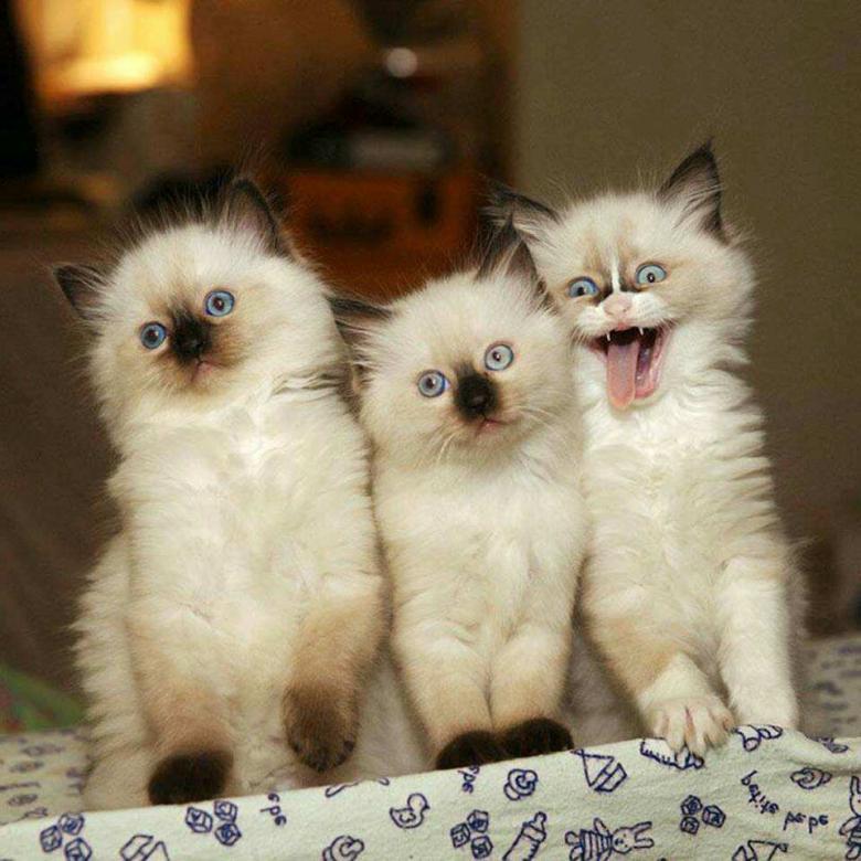 Lieve en lieve katten - Dit puzzelspel is ontworpen om je mentale vaardigheden te verbeteren en plezier te hebben om stress te verminderen (15×15)