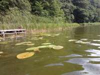 Een meer in Bory Tucholskie