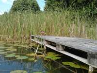un lac din Bory Tucholskie - lacul din Bory Tucholskie