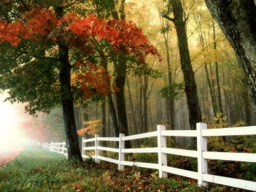Herbstlicher Wald - Durch die verzweigten Äste der Bäume fallen die Strahlen der untergehenden Sonne, was den Wald noc