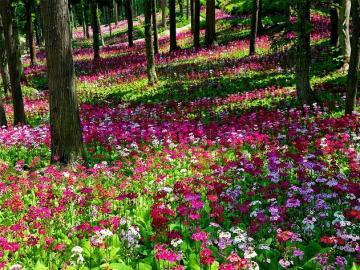 Forêt florale. - Fleurs. Forêt florale.