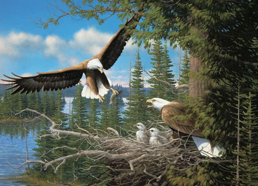 Sas fészek - Bird. Sas fészek (11×10)
