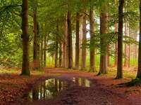 """Min höstskog - Och här är """"min skog"""", den som jag har närmast, den som är känd sedan min barndom och"""