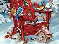 Oiseaux colorés. - Oiseaux colorés sur la neige.