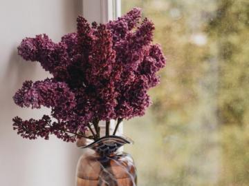 Fioletowe bzy - Bzy pięknie pachną. Bzy piękne kwiaty