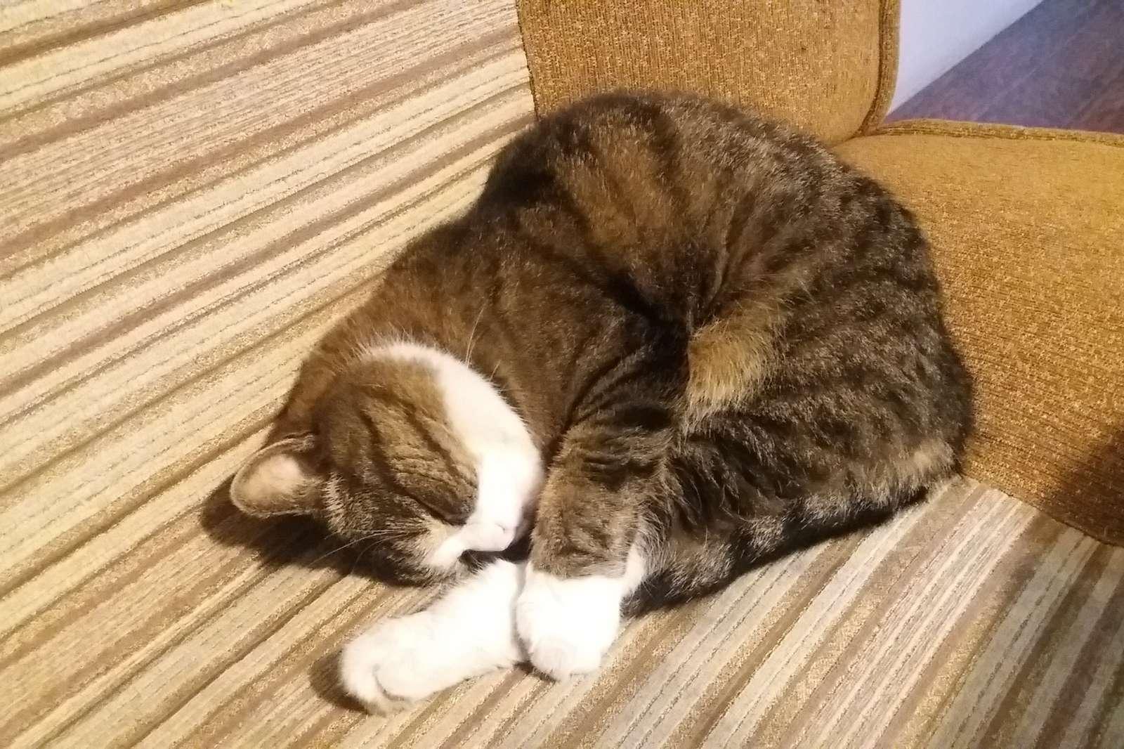 Kitty, slaapt en droomt (10×9)