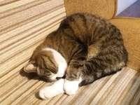 Kitty, slaapt en droomt.