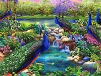 Цветни птици. -  Пауни в пейзажа.