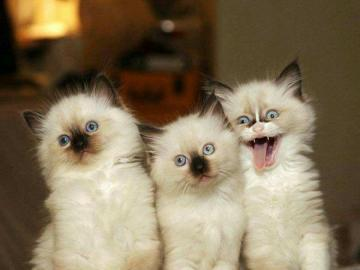 3 chatons mignons, chatons - ils sont doux chaton, cher et doux chat kitty