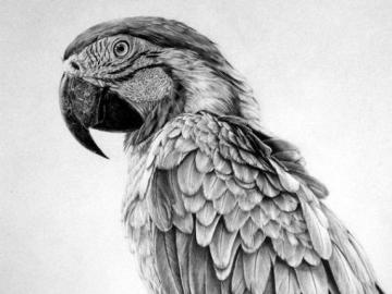 Sketched Papagei - Puzzle-Spiel für Künstler - Skizzierter Papagei, schöne Zeichnung.
