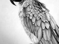 Vázolt papagáj - kirakós játék a művészek számára - Vázolt papagáj, gyönyörű rajz.