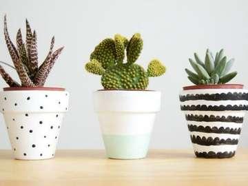 naturalny - trzy piękne rośliny