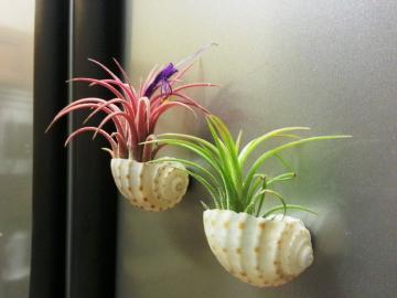 zawieszony - dekoracja ścian przez rośliny