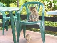 Grote en kleine kat.