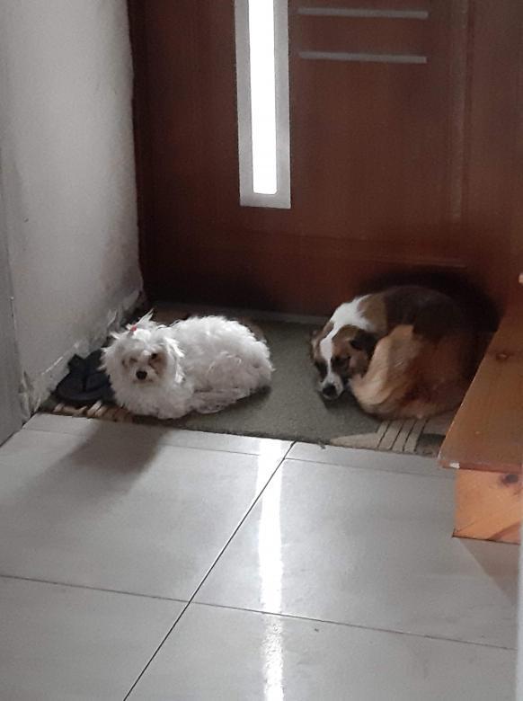 2 kleine honden - Heel coole puzzel alsjeblieft (15×15)