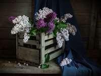 Összetétel lila