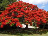 Virágzó fa - Virágzó fa. Kár, hogy egy gyönyörű virágzó fa nem az enyém. Egy virágzó fa bermudai.