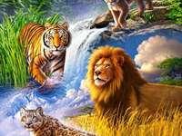 Животни: големи котки.