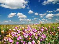 flower meadow - A colorful meadow full of flowers