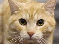 Oranje Cat
