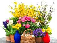 Jaro a barevné. - .Spring a barevné.