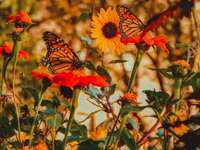 A beautiful butterfly among nature - Butterflies and nature, something beautiful