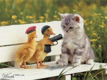criminal - Baby ducks threaten cat
