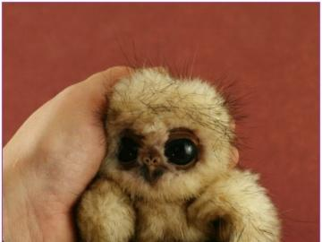 baby owl - cute baby owl on hand