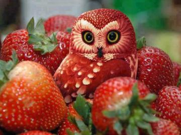 Erdbeereule - Strawberry owl between strawberries