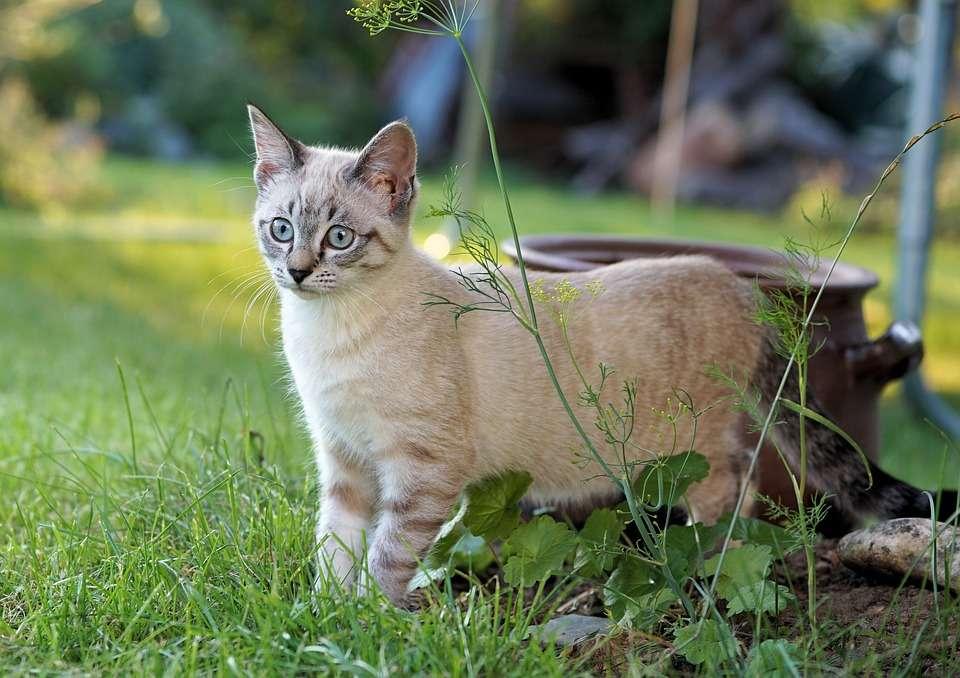Een verbaasde kat - Het gezicht van de kat is van onschatbare waarde (10×10)