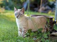 Een verbaasde kat